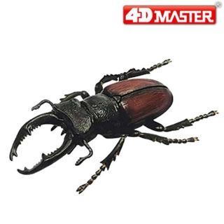 【4D MASTER】甲蟲系列-鍬形蟲 STAG BEETLE
