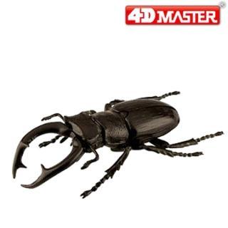 【4D  MASTER】黑武士鍬形蟲BLACK STAG BEETLE