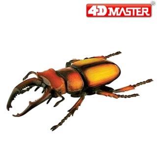 【4D  MASTER】甲蟲系列-鹿兒島鍬形甲蟲 (KAGOSHIMA STAG BEETLE)
