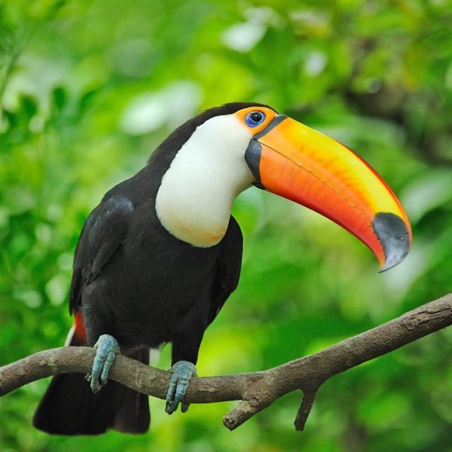 【新竹北埔】綠世界生態農場門票(10張入)