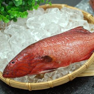 【優鮮配】峇里島野生紅鰷石斑魚10條(約450g/條)