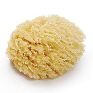 【西班牙coochi】天然深海海綿