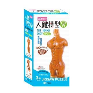 【世一】3D立體積木--人體模型(男)