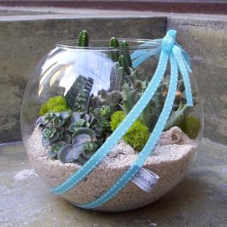 【Santa Ana】10吋玻璃球多肉植物盆栽組合(三種以上不同植栽)