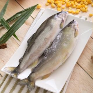 【華得水產】特選超爆卵母無毒香魚1盒(5-6尾/1kg/盒)