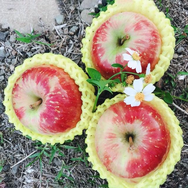 【水果達人】嚴選大顆 紐西蘭無臘蜜蘋果12顆* 3盒(蜜蘋果)