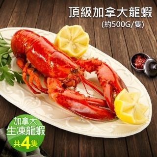 【優鮮配】加拿大直送頂級波士頓龍蝦4隻(約500g/隻)