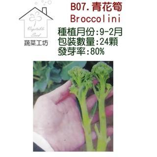 【蔬菜工坊】B07.青花筍種子