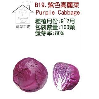 【蔬菜工坊】B19紫色高麗菜種子