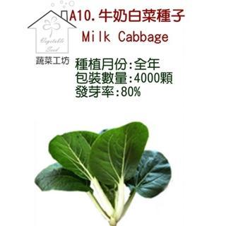 【蔬菜工坊】A10.牛奶白菜種子