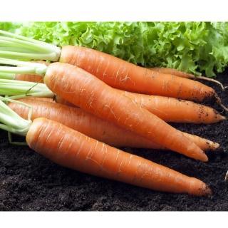 【鮮採家】鮮採紅蘿蔔3台斤1箱
