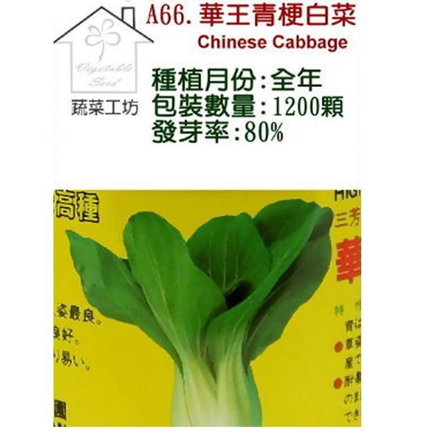 【蔬菜工坊】A66.華王青梗白菜種子