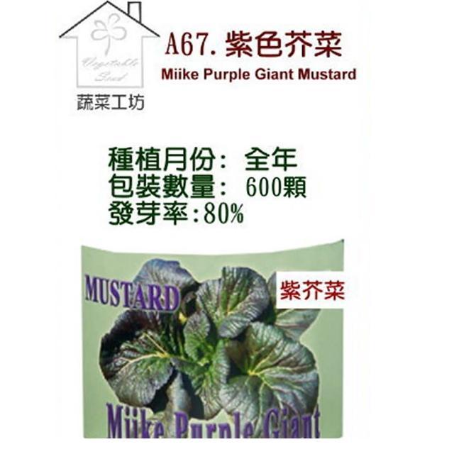 【蔬菜工坊】A67.紫色芥菜種子