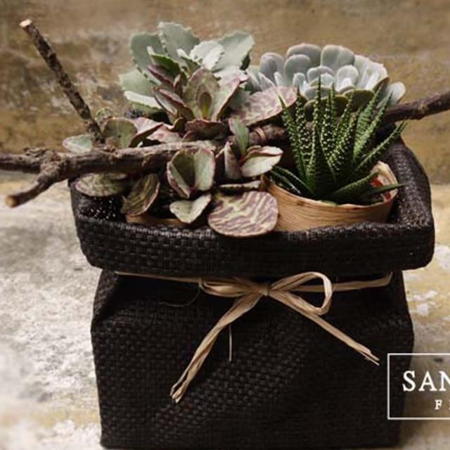 【Santa Ana】盆栽小禮袋(多肉植物的組合)