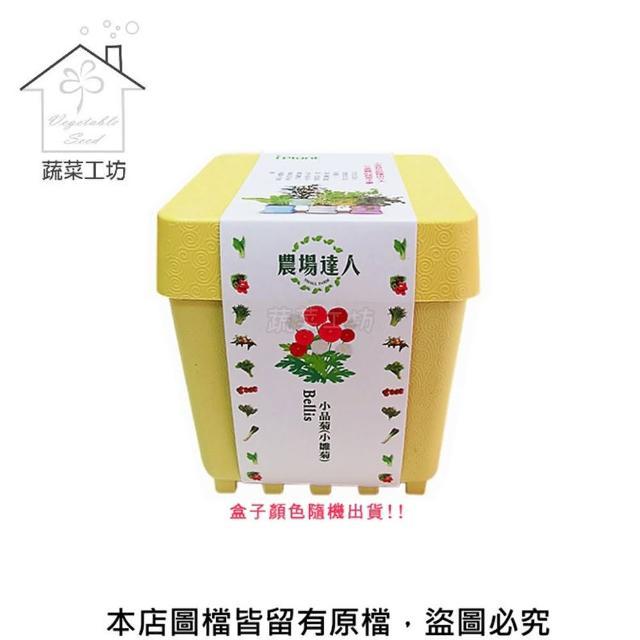 【蔬菜工坊004-D07】iPlant小農場系列-小品菊