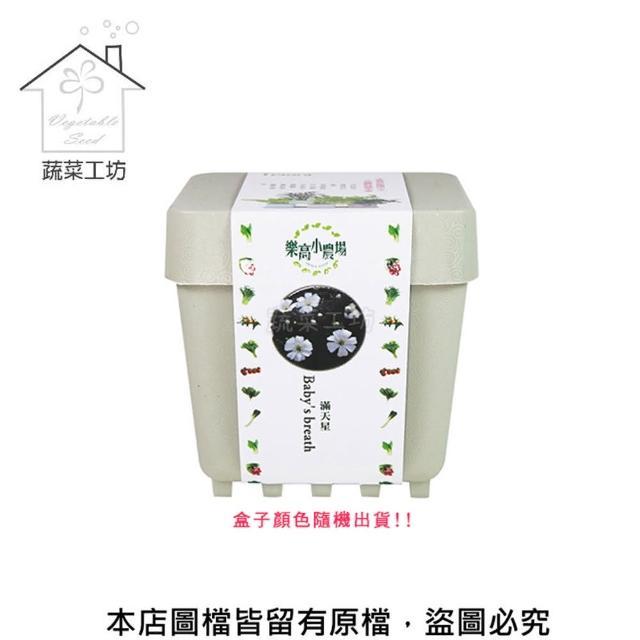 【蔬菜工坊004-D08】iPlant小農場系列-滿天星