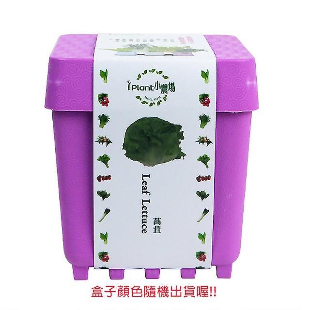 【蔬菜工坊004-D15】iPlant小農場系列-萵苣