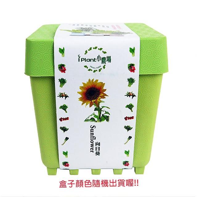 【蔬菜工坊004-D16】iPlant小農場系列-向日葵
