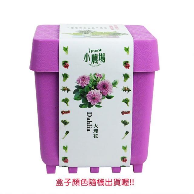 【蔬菜工坊004-D18】iPlant小農場系列-大理花