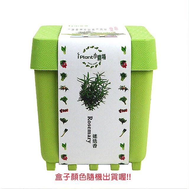 【蔬菜工坊004-D19】iPlant小農場系列-迷迭香