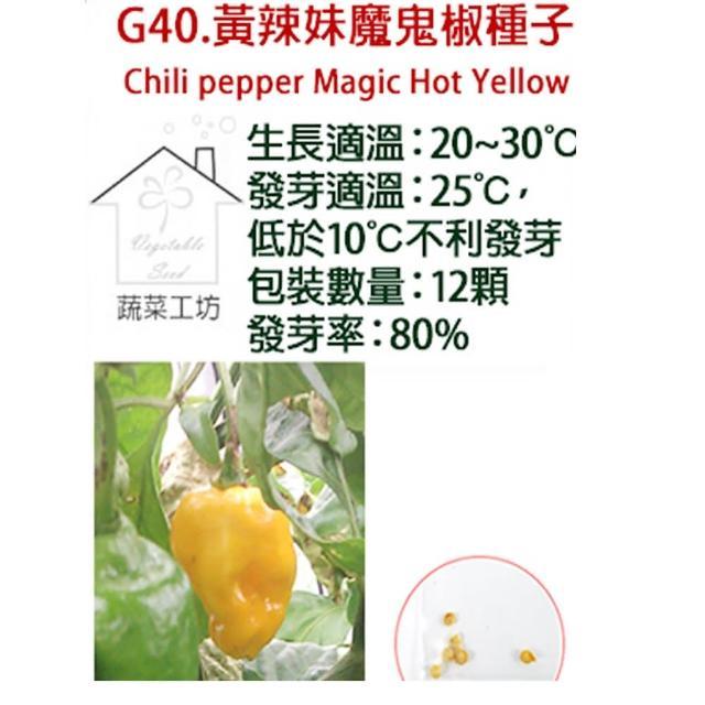 【蔬菜工坊】G40.黃辣妹魔鬼椒種子