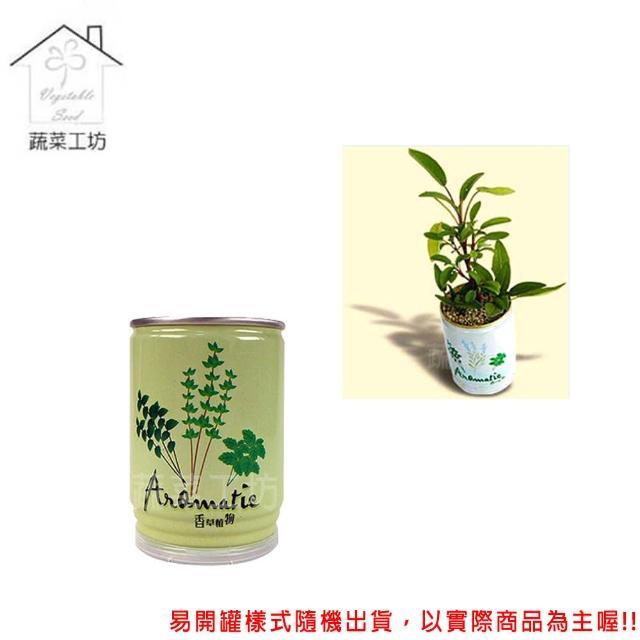 【蔬菜工坊004-E08】iPlant易開罐花卉-鼠尾草