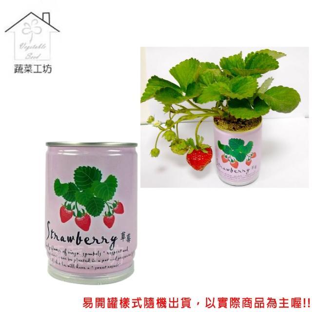 【蔬菜工坊004-E13】iPlant易開罐花卉-草莓