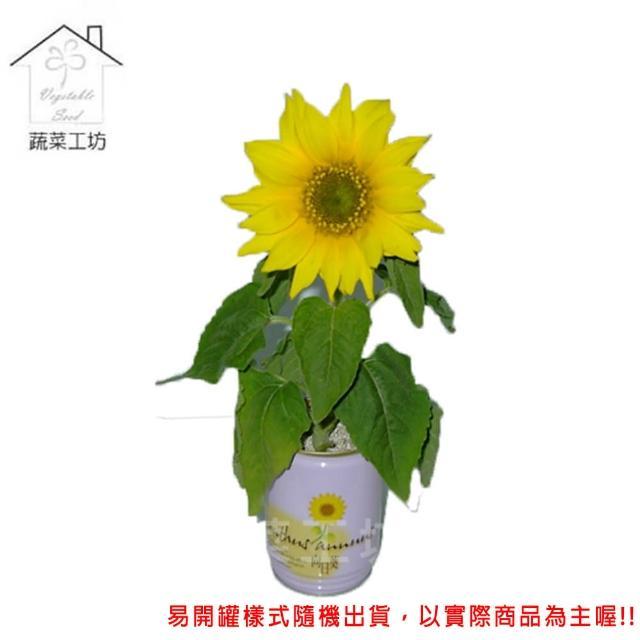 【蔬菜工坊004-E18】iPlant易開罐花卉-向日葵