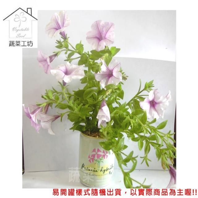 【蔬菜工坊004-E20】iPlant易開罐花卉-矮牽牛
