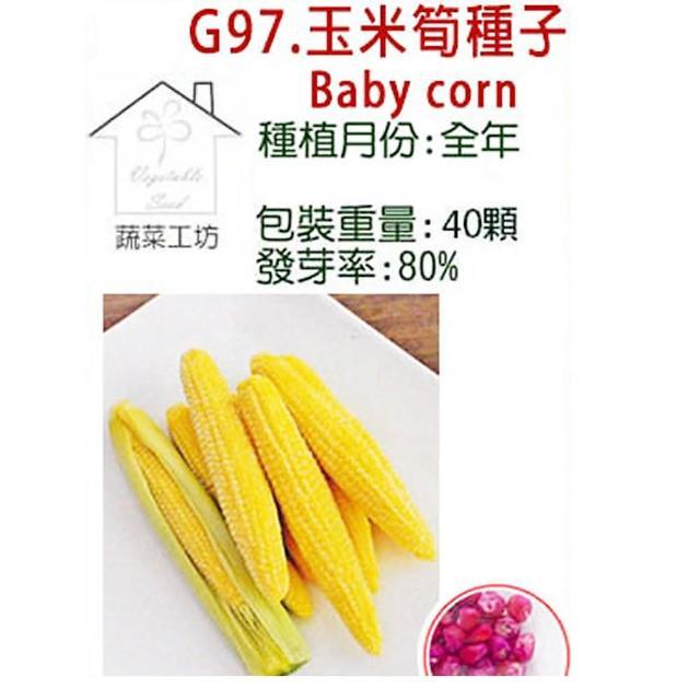 【蔬菜工坊】G97.玉米筍種子