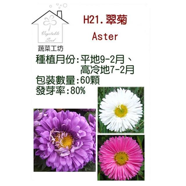 【蔬菜工坊】H21.翠菊種子(蜜蕾、混合色、高25cm)