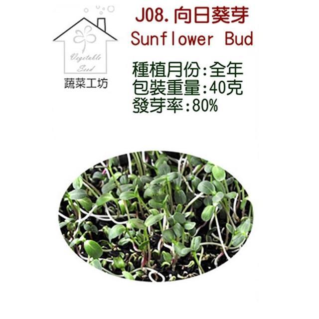 【蔬菜工坊】J08.向日葵芽種子(芽菜種子)
