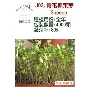 【蔬菜工坊】J03.青花椰菜芽種子(芽菜種子)