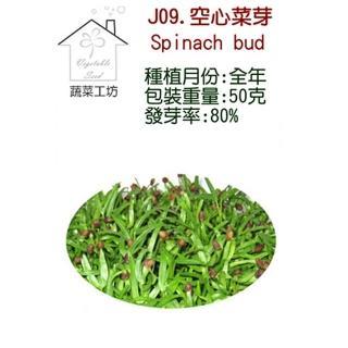 【蔬菜工坊】J09.空心菜種子(芽菜種子)