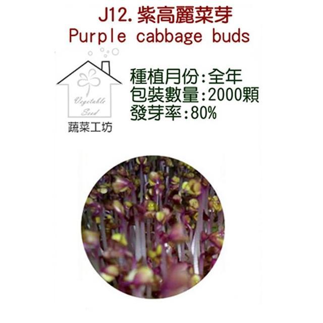 【蔬菜工坊】J12.紫高麗菜芽種子(芽菜種子)