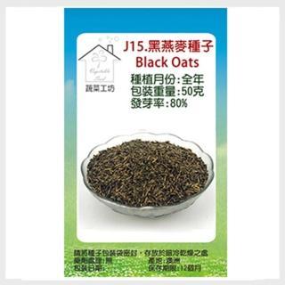 【蔬菜工坊】J15.黑燕麥種子25克(燕麥草.綠肥)
