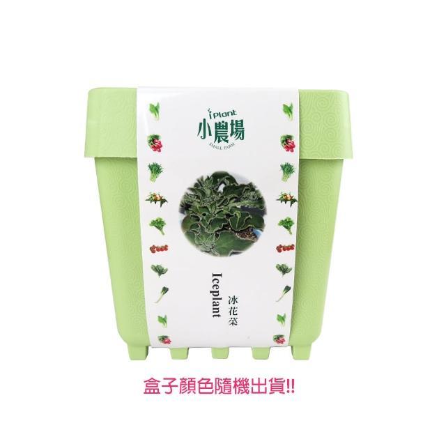 【蔬菜工坊】iPlant小農場系列-冰花菜