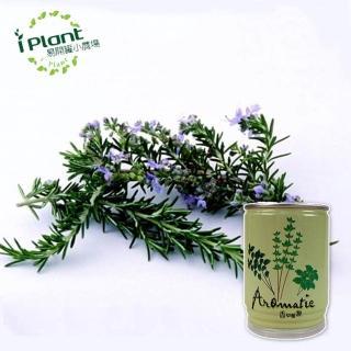 【iPlant】易開罐頭小農場-迷迭香(開心農場療鬱小物)