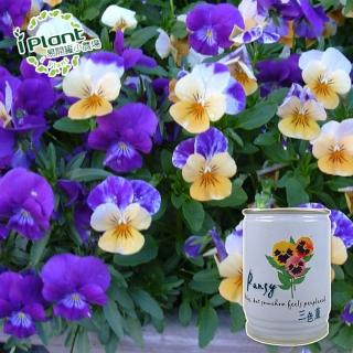 【iPlant】易開罐頭小農場-三色堇(開心農場療鬱小物)