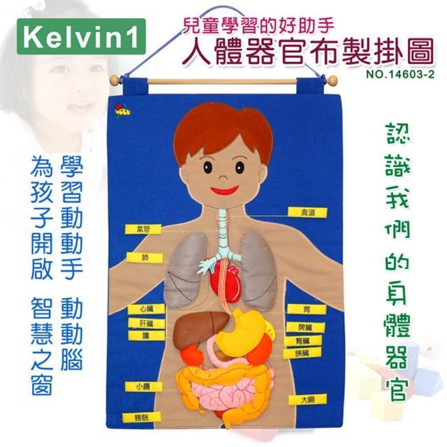 【兒童學習的好助手】人體器官布製掛圖(No.14603-2)