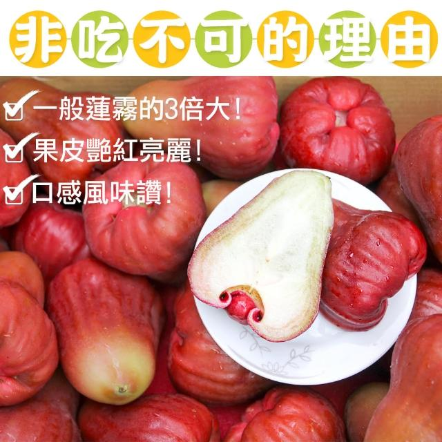 【鲜果日志】莲雾界的LV 黑糖芭比4台斤
