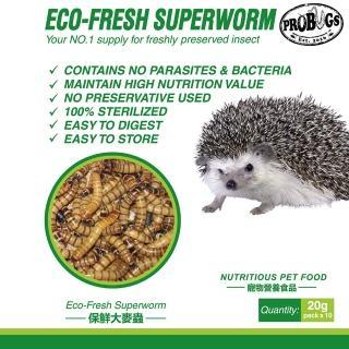 【昆寶寵物原形食糧】大麥蟲生鮮包(蜜袋鼯/刺蝟/鬃獅蜥最愛)/