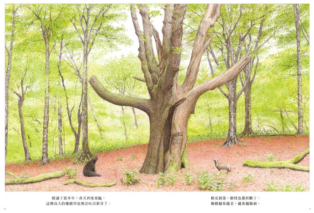 森林裡的橡樹