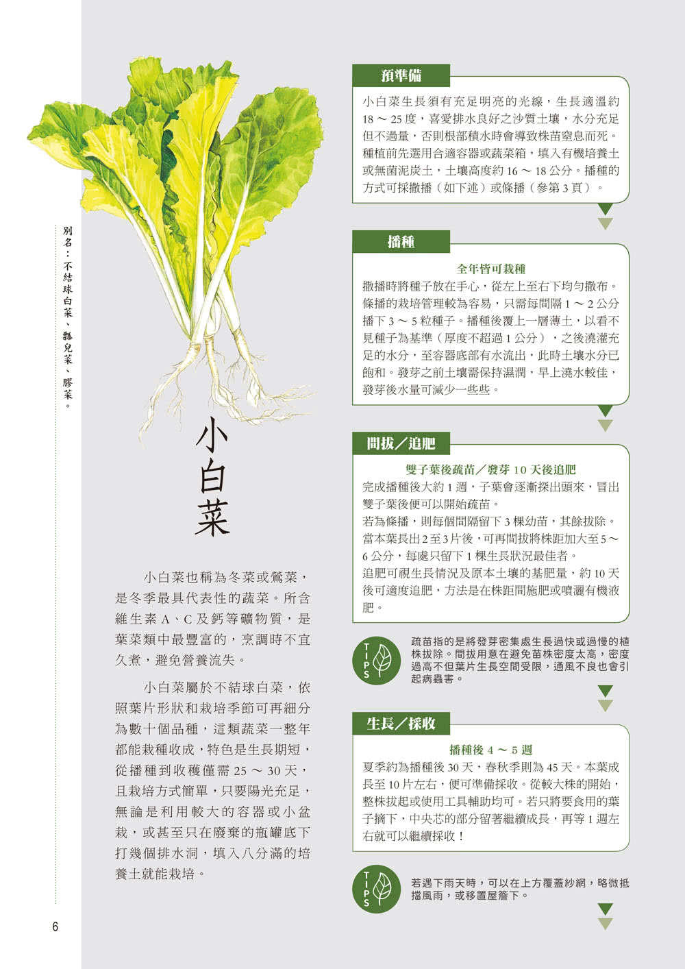 60公分果菜園(首刷隨書限量附贈茄子種子包)